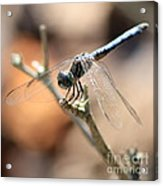 Tired Dragonfly Square Acrylic Print
