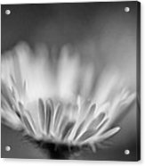 Tis But A Dream 2 Monochrome Acrylic Print