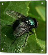 To Be The Fly On The Salad Greens Acrylic Print by Barbara St Jean