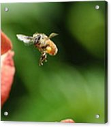 To Bee Or Not Acrylic Print