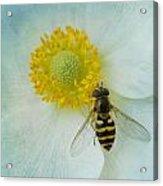 To Bee Us  Acrylic Print