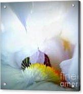 To Enter The White Iris Acrylic Print