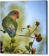 To Love A Lovebird Acrylic Print