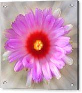 To Return To Innocence. Cactus Flower Acrylic Print by Jenny Rainbow