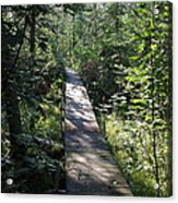 To The Trout Stream Acrylic Print