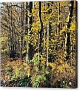 To The Woods Acrylic Print