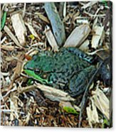 Toad Master Acrylic Print
