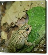 Toad Under Cover  Acrylic Print