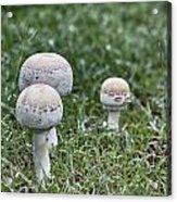 Toadstools V9 Acrylic Print