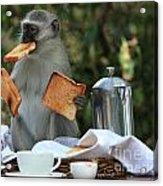 Toast Monkey Acrylic Print