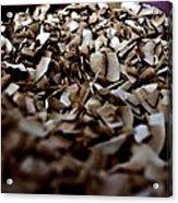 Toasty Coconut Acrylic Print by John Grace