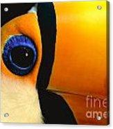 Toco Toucan Face Acrylic Print