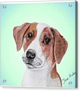 Toffee - A Former Shelter Sweetie Acrylic Print