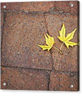 Together Yellow Maple Leaves Acrylic Print