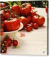 Tomatoes Tomatoes Acrylic Print