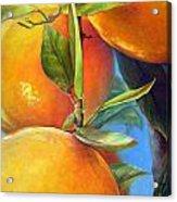 Tombee d Oranges Acrylic Print