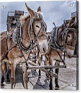 Tombstone Mules Acrylic Print