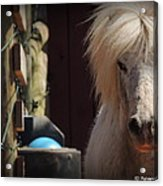 Tonkas Bad Hair Day Acrylic Print