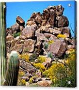 Tonto Saguaro Rocks 10189 Acrylic Print
