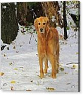 Too Early For Snow Mama Acrylic Print
