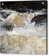 Too Much 983 Acrylic Print