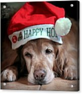 Too Much Eggnog Acrylic Print by Karen Wiles