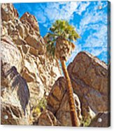Top Of A Palm Near Top Of Andreas Canyon-ca Acrylic Print