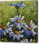 Top Of The Bunch Daisies By Prankearts Acrylic Print