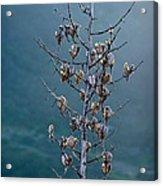 Topanga Canyon Flora #1 Acrylic Print