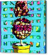 Topiary Of Dried Roses Acrylic Print