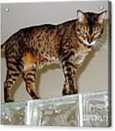 Tora On Glass II Acrylic Print