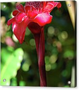 Torch Ginger Acrylic Print