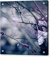 Torn And Tattered Acrylic Print by Shane Holsclaw