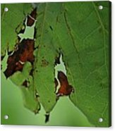 Torn Leaf Abstract Acrylic Print