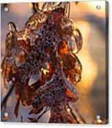 Toronto Ice Storm 2013 - Oak Leaves Jewelry Acrylic Print
