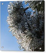 Toronto Ice Storm 2013 - Pine Needle Flowers In The Sky Acrylic Print