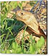 Tortoise Greens Acrylic Print