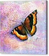 Tortoiseshell Butterfly Acrylic Print