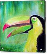 Toucan Land Acrylic Print