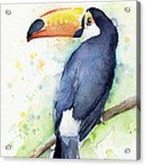 Toucan Watercolor Acrylic Print