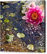 Touch Of Pink Acrylic Print