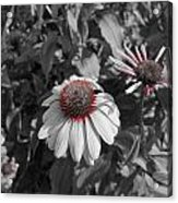 Touch Of Red Invite Acrylic Print