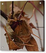 Touched By Jack Frost Acrylic Print