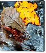Touching In Time Acrylic Print