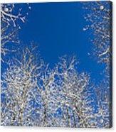 Touching The Winter Sky Acrylic Print