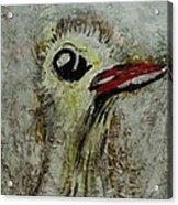 Tough Ol Bird Acrylic Print