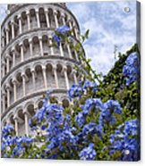 Tower Of Pisa With Blue Flowers Acrylic Print