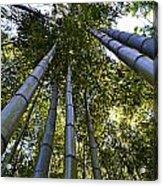 Towering Bamboo Acrylic Print