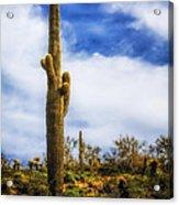 Towering Saguaro Acrylic Print