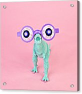 Toy Dinosaur With Spooky Glasses Acrylic Print